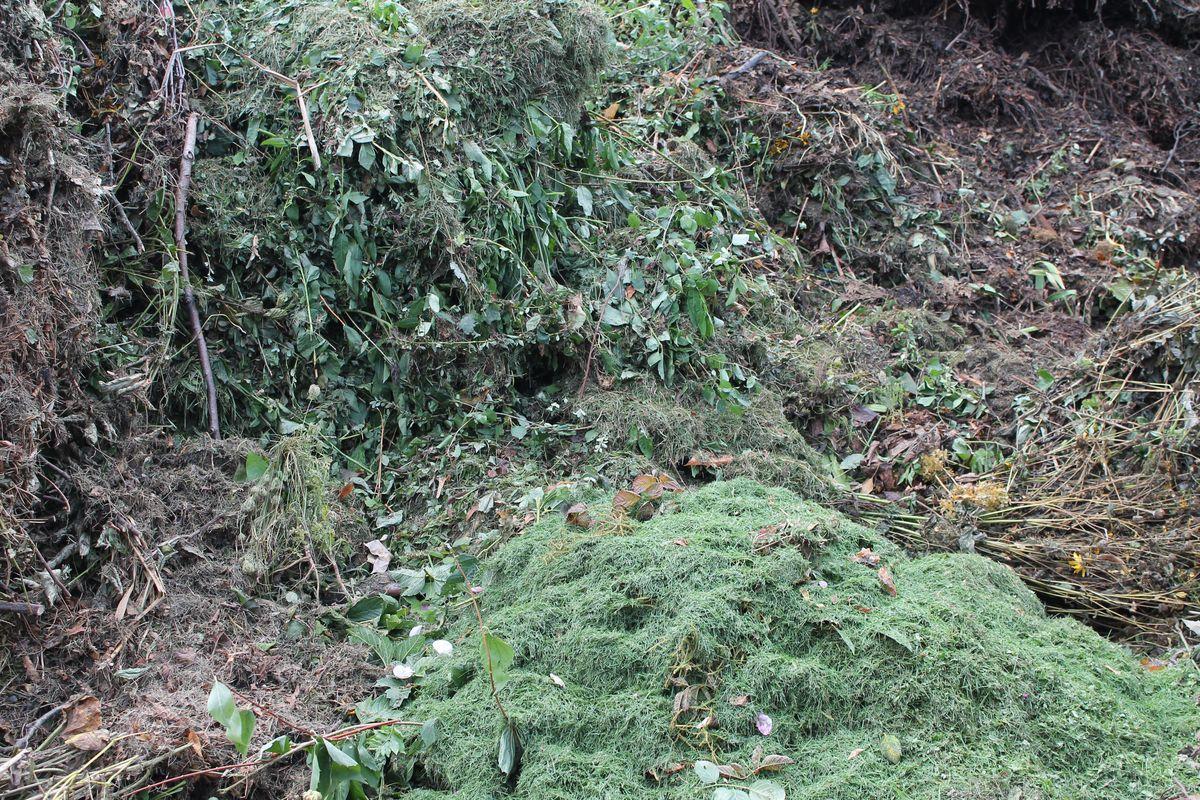 Grünabfall, Laub, Grasschnitt - 1,5 m³